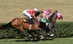 Horse race betting types explained